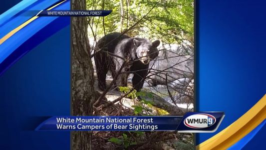 Campers, hikers warned to keep food safe from bears