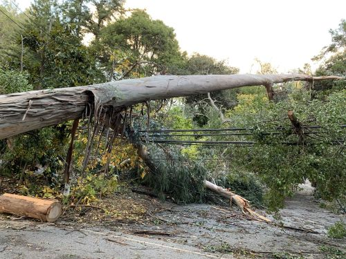 Severe weather leaves trees snapped and thousands without power in Santa Cruz Mountains