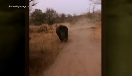 'He was determined to get us': Rhino charges tourists