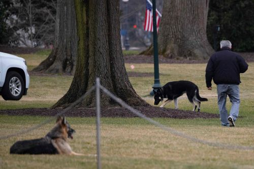 Biden's German shepherds sent back to Delaware after reportedly biting security guard