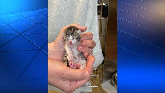 19 cats, kittens rescued from deplorable conditions at home in Allegheny County