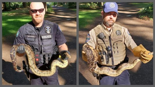 8 pythons captured and removed from Oregon park
