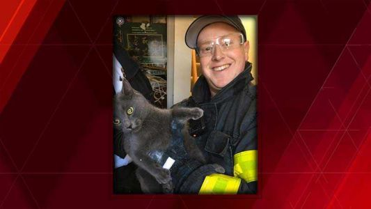 Cat trapped in wall rescued by firefighters in Hyannis
