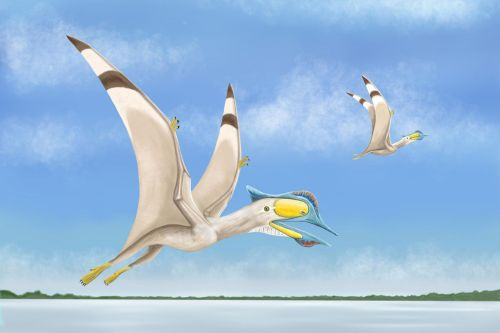 Remains of 100M year-old flying pterosaur with 6-inch beak unearthed by scientists