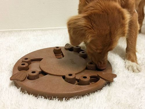 These interactive toys sharpen your dog's problem-solving skills while rewarding them with treats