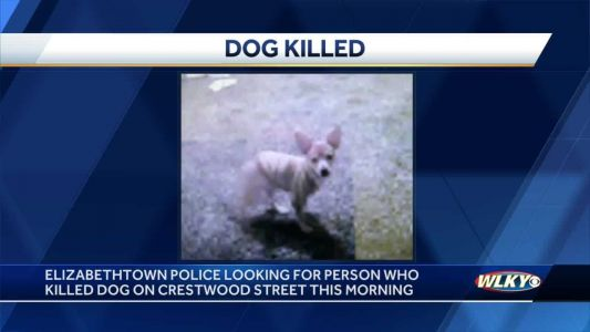 Owner finds dog shot on lawn, Elizabethtown police searching for person responsible