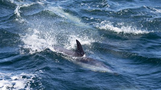 A Lobster Diver In Cape Cod Says A Humpback Whale Scooped Him Up And Spat Him Out