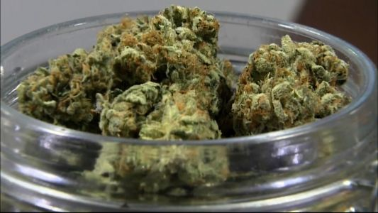 Minnesota House Approves Recreational Marijuana Bill, The First-Ever Vote Of Its Kind In The State