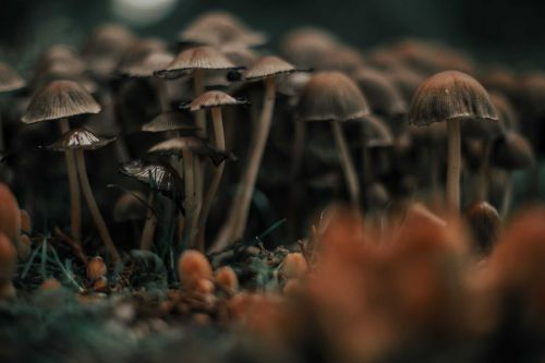 Mold at Florida military housing caused mushrooms to grow out of carpets, lawsuit says