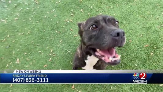 Friday's Furry Friend: How to adopt a pet in Central Florida