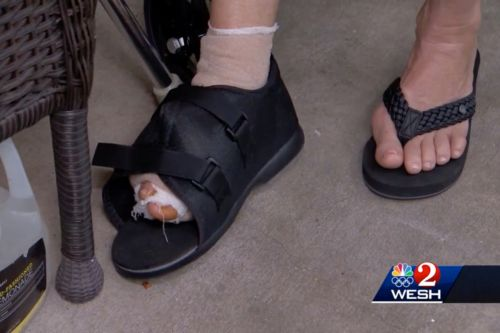 Florida shark attack victim says she was tossed 'like a fish'