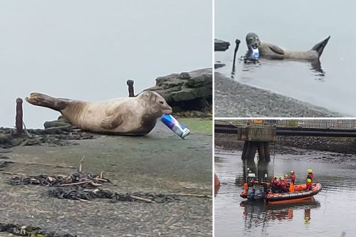 Seal rescued after swimming 80 miles with Red Bull can stuck in mouth