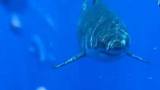 Incredible video shows great white shark near boat off Florida coast