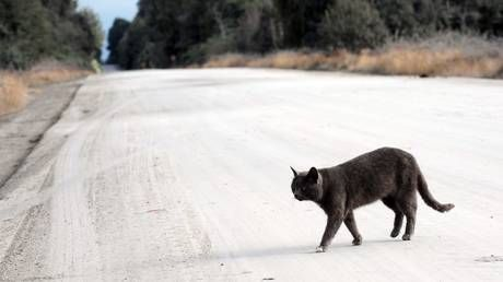 Feline unwell? Cat birthday party sparked coronavirus cluster in Chile