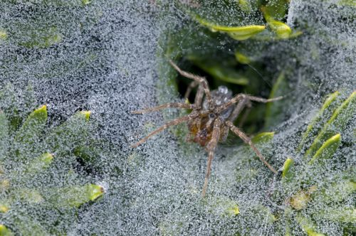 Millions of spiders spin giant webs to escape flooding in Australia