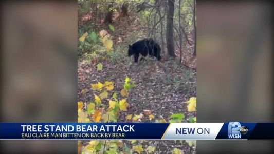 'Once he put his paw on my hip, then you become a little uneasy': Baseball player bit by bear
