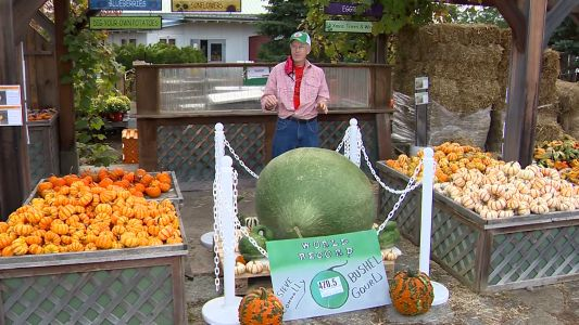 Giant 470.5-pound gourd grown in Massachusetts makes way into record books
