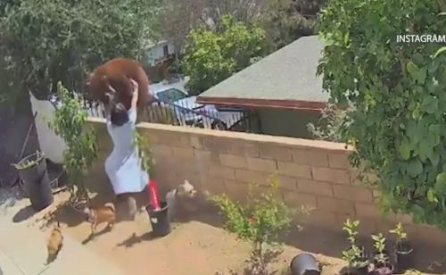 California 17-year-old shoves bear to save her dogs, video shows