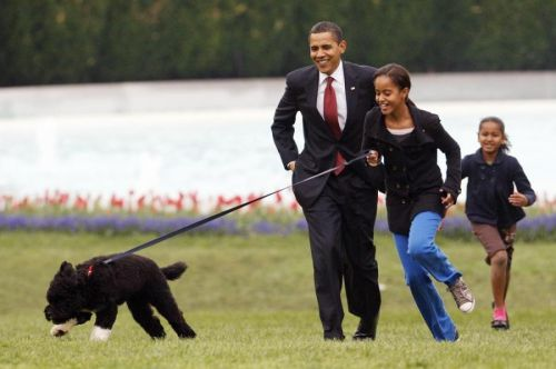 Obama's dog Bo, once a White House celebrity, dies from cancer