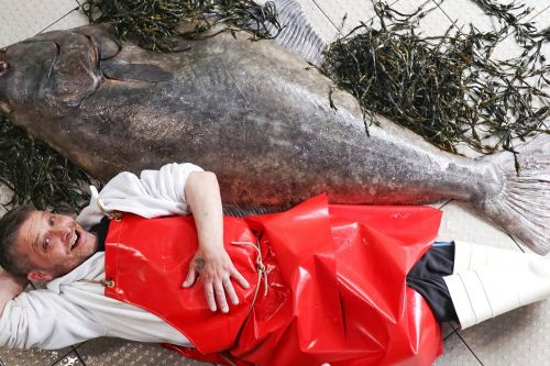 Fishmonger reveals man-sized fish recently caught in North Sea