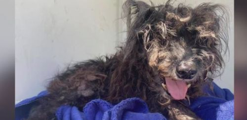 Arkansas dog 'Razzle' missing for 10 years found in California; family overjoyed