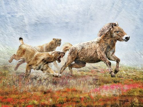 New analysis of a saber-toothed cat fossil reveals the ancient animals were ruthless, highly skilled hunters