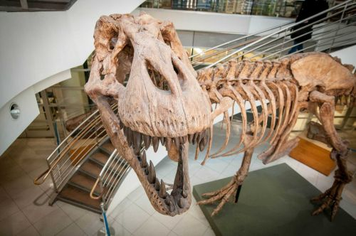 Here's how many T. rex once roamed Earth, according to a team of researchers. The answer is staggering