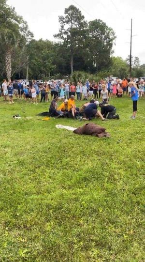 Despite outcry, gator believed to be the largest ever captured on Hilton Head Island is euthanized