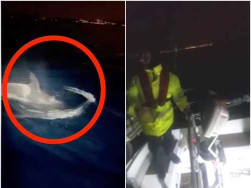 Video shows sailors fighting off a pod of killer whales with poles and flares after they break boat's rudder