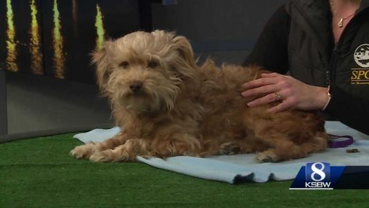 KSBW Pet of the Week: Curly!