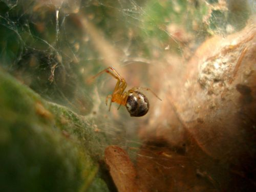 Study: Hurricanes lead to more aggressive spiders