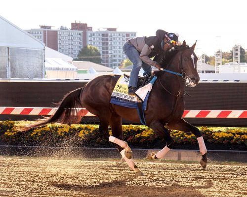 Trainer speaks of new Preakness favorite, Midnight Bourbon, like Hollywood star
