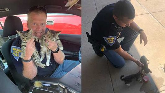 Indiana trooper adopting kittens found abandoned along highway