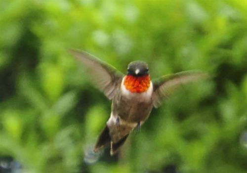 Obsessed with bugs or hummingbirds? You're not alone