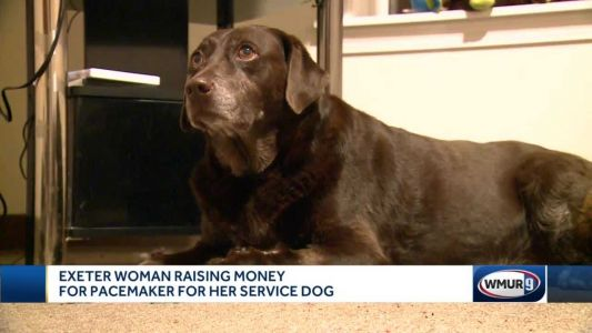 Woman raising money for pacemaker for service dog
