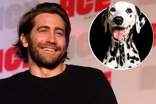 Jake Gyllenhaal saves giant Dalmation in the middle of busy NYC intersection