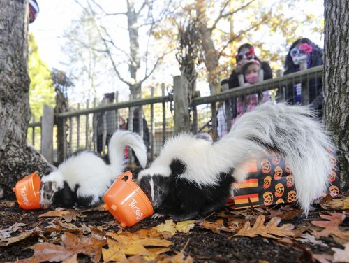 Boo at the Zoo Halloween Event in New Bedford's Buttonwood Park