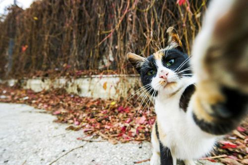 Caught on camera: These photos of cats and dogs will make you smile