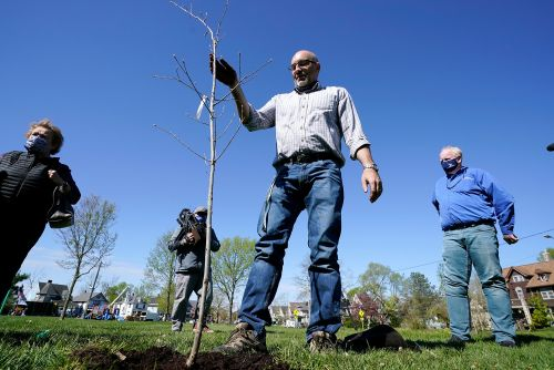 Cedar Rapids tries to turn city of stumps into tree oasis
