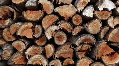 Germans should change course on energy policy to avoid heating homes with firewood as Putin once joked - Knorr-Bremse boss