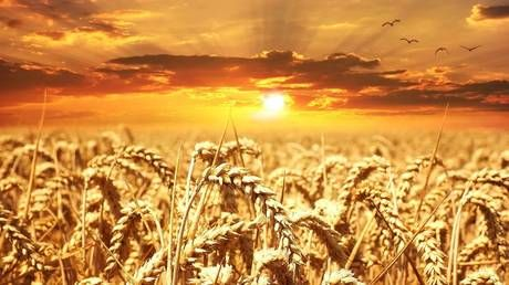 Russia doubles wheat export duty to stabilize domestic food prices