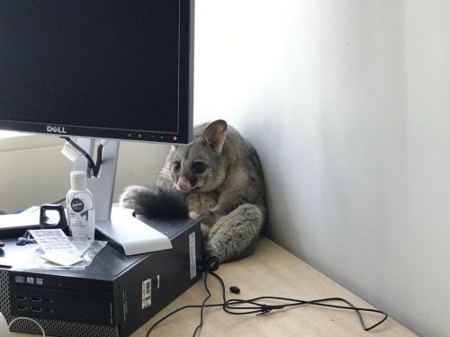 13 times wild animals ended up in places they shouldn't be