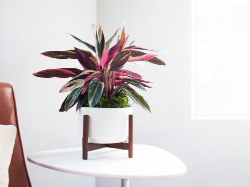 This online startup makes shopping and caring for beautiful house plants convenient and easy - even for people who don't think they have a green thumb