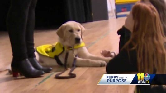 School visit from Brooks teaches students about service dogs