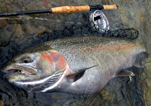 It's easy to find regional fly tying events and activities